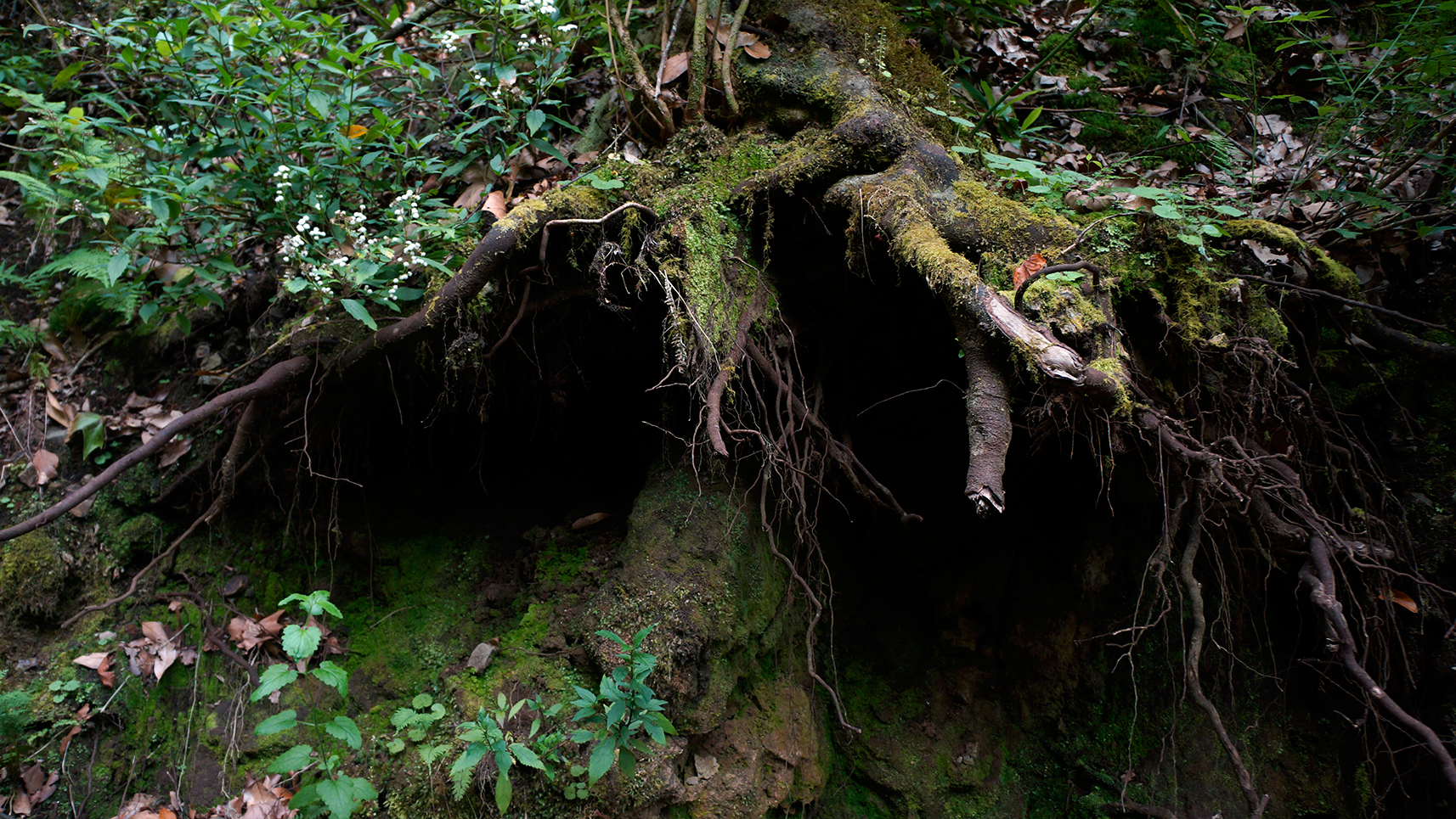 laurissilva-forest-madeira-portugal-3