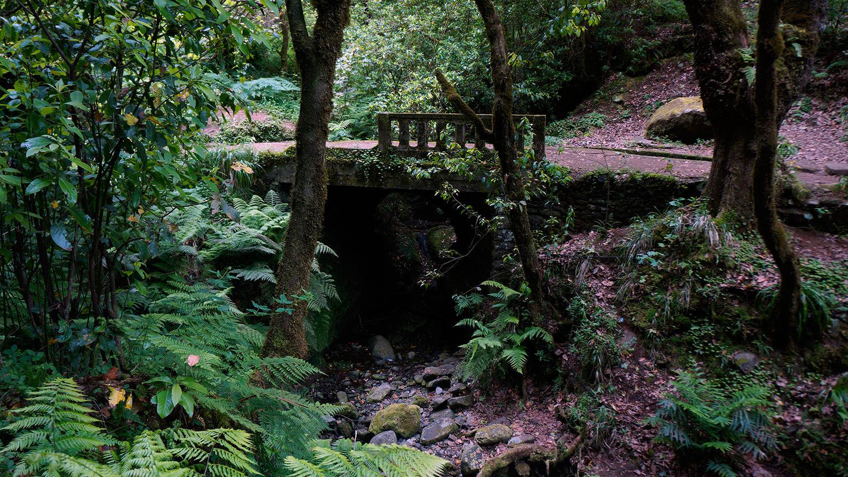 laurissilva-forest-madeira-portugal-4