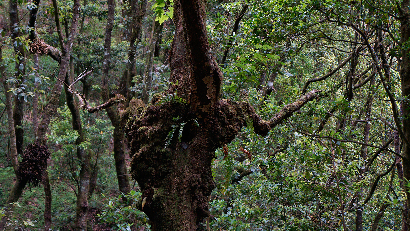 laurissilva-forest-madeira-portugal-5