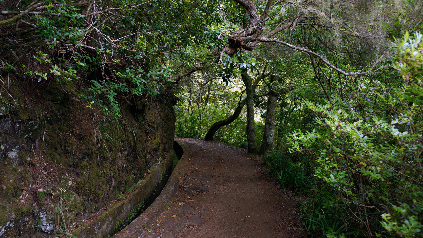 laurissilva-forest-madeira-portugal-6