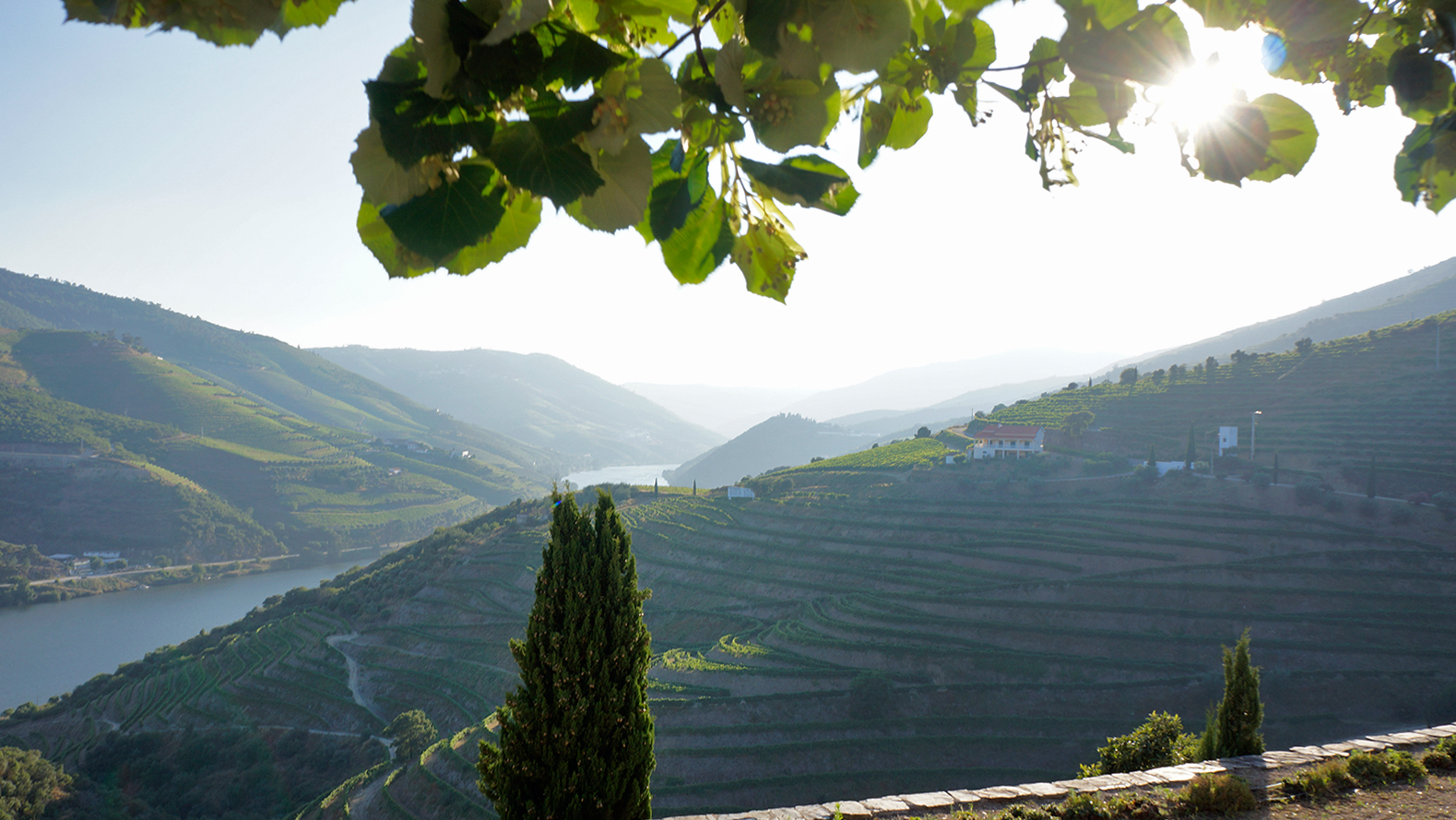 quinta-nova-vineyard-douro-valley-guimaraes-portugal-8